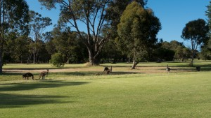 Spectators on the Golf Course